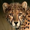 Character Portrait: Teran