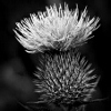 Character Portrait: Thistle Monday