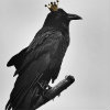 Crows and Coins