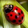 Character Portrait: Lexi Murray, aka Ladybug